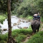 Escursioni trekking a dorso d'elefante da Khao Lak