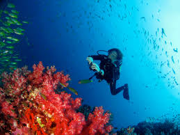 Diving Similan Islands – Khao Lak
