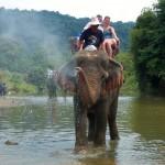 Elefantenreiten & Baden
