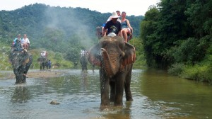 Elephant Trekking - Bathing