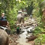 Half Day Elephant Trekking Khao Lak