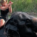 Gepflegte Elefanten