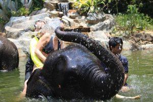 Khao Lak Elephant Bathing