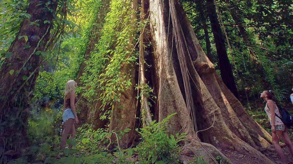 Hong Island Tour - Big Tree at Koh Yao Noi