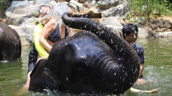 Elephant Bathing Khao Lak